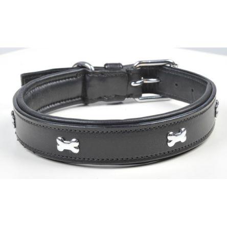 photo collier pour chien