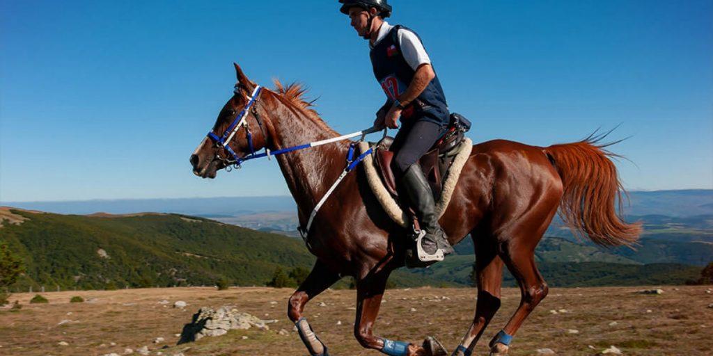 cheval endurance equipement