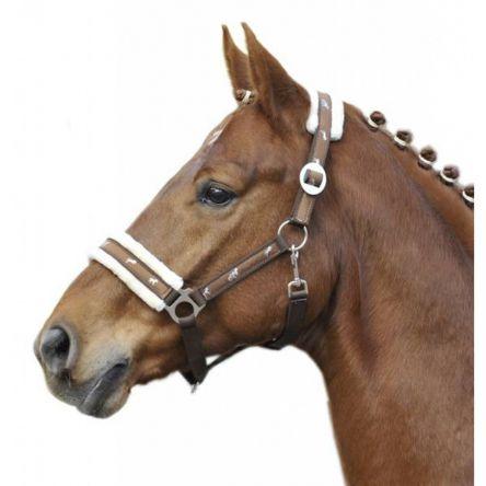 licol equipement cheval